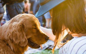 Padrona accarezza il proprio cane
