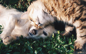 Cane e gatto giocano sull'erba prima della benedizione a Roma